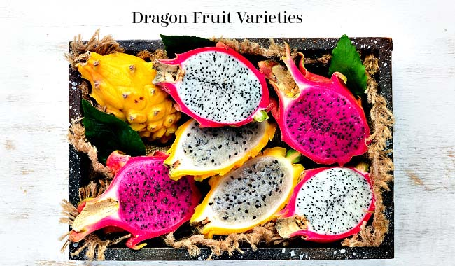 Dragon Fruit Varieties