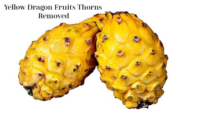 Yellow Dragon Fruit Thorns
