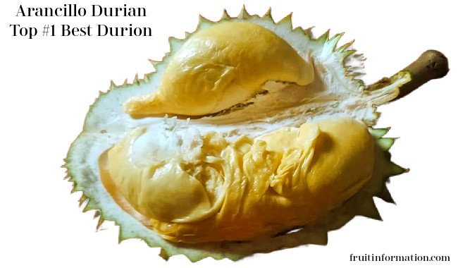 Arancillo Durian Fruit Best Tasting Durian Fruit