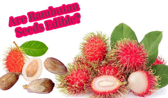 Are Rambutan Seeds Edible