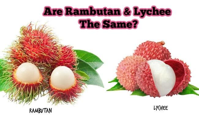 Are Rambutan and Lychee the Same