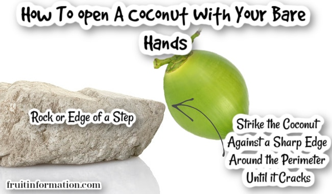 Can You Open A Coconut With Bare Hands