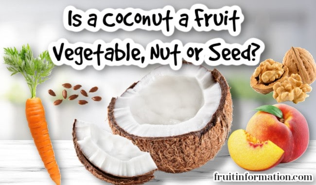 Is a Coconut a Fruit or Vegetable or Nut or Seed