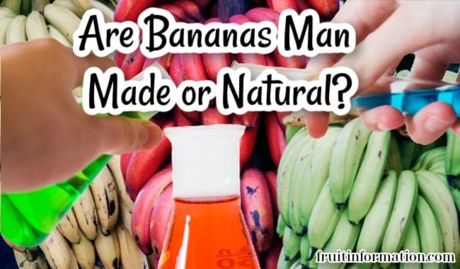 Are Bananas Man Made or Natural