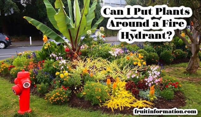 Can I Put Plants Around a Fire Hydrant