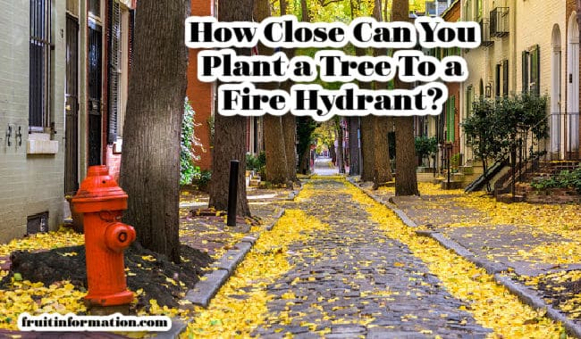 How Close Can You Plant a Tree From a Fire Hydrant