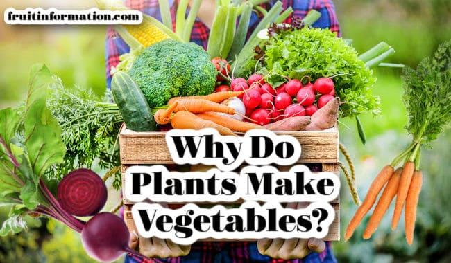Why Do Plants Make Vegetables