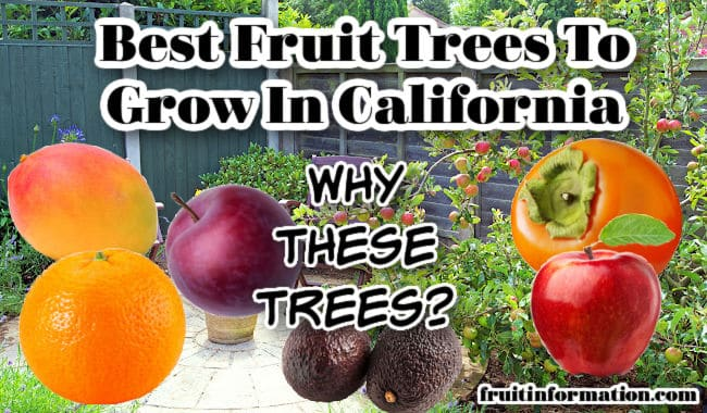 Best Fruit Trees To Grow in California