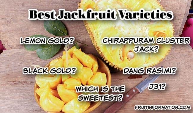 Best Jackfruit Varieties