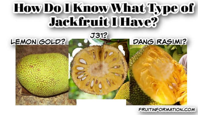 How Do I Know What Type Of Jackfruit I Have?