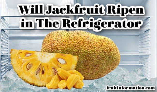 Jackfruit Ripen Refrigerator