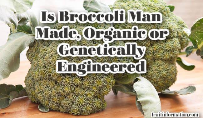 Is Broccoli Man Made Organic or Genetically Engineered